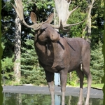 Magnificient Moose